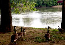 Daniel Boone Park